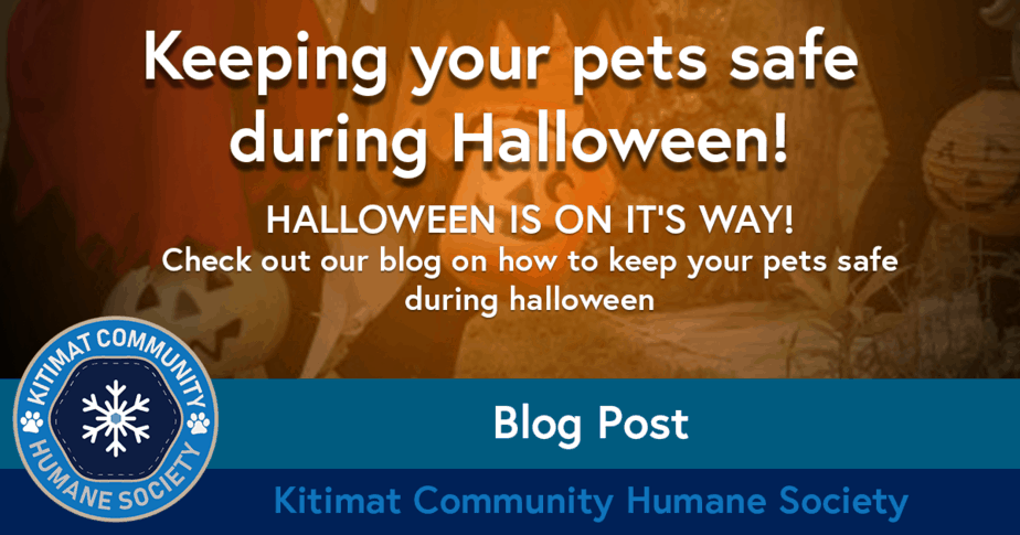Keeping Pets Safe Halloween
